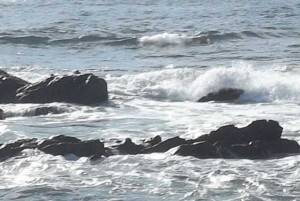 メジナが好む波の状態